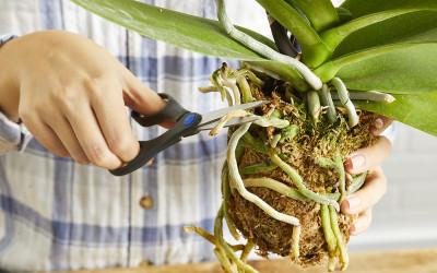 Как правильно выращивать орхидеи во мхе