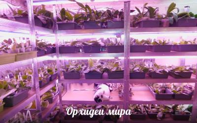 Передержка и отправка орхидей в зимнее время