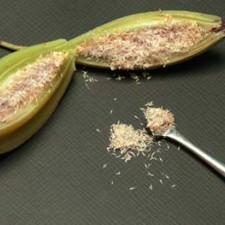Опыление, размножение семенами