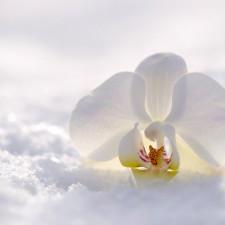 Уход за орхидеей в разные поры года