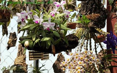 Адаптация орхидей