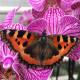 Ароматные орхидеи