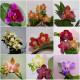 Все орхидеи