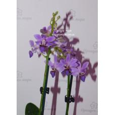 Dtps. Purple Gem Aida уценка