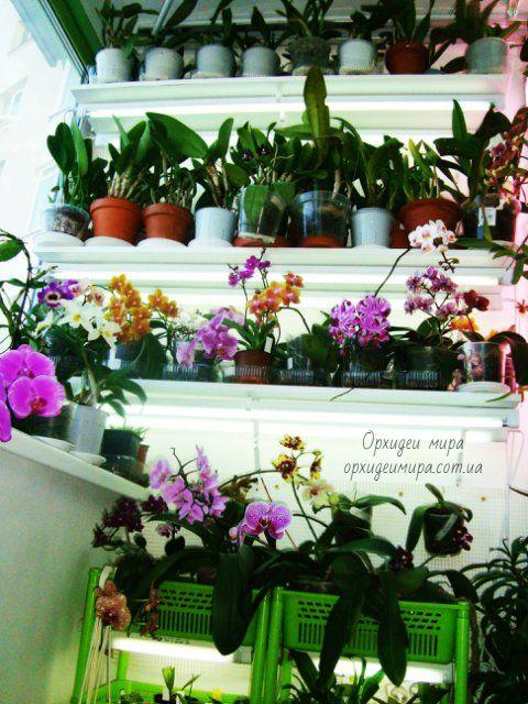 Подсветка орхидей