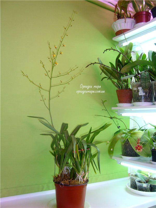 Выбор подходящего места для орхидеи