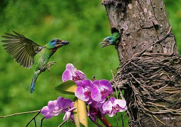 Корни орхидеи в природе