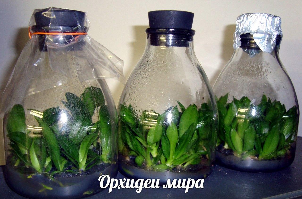 Фласки орхидей