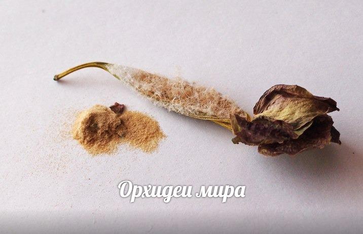 Семена орхидеи