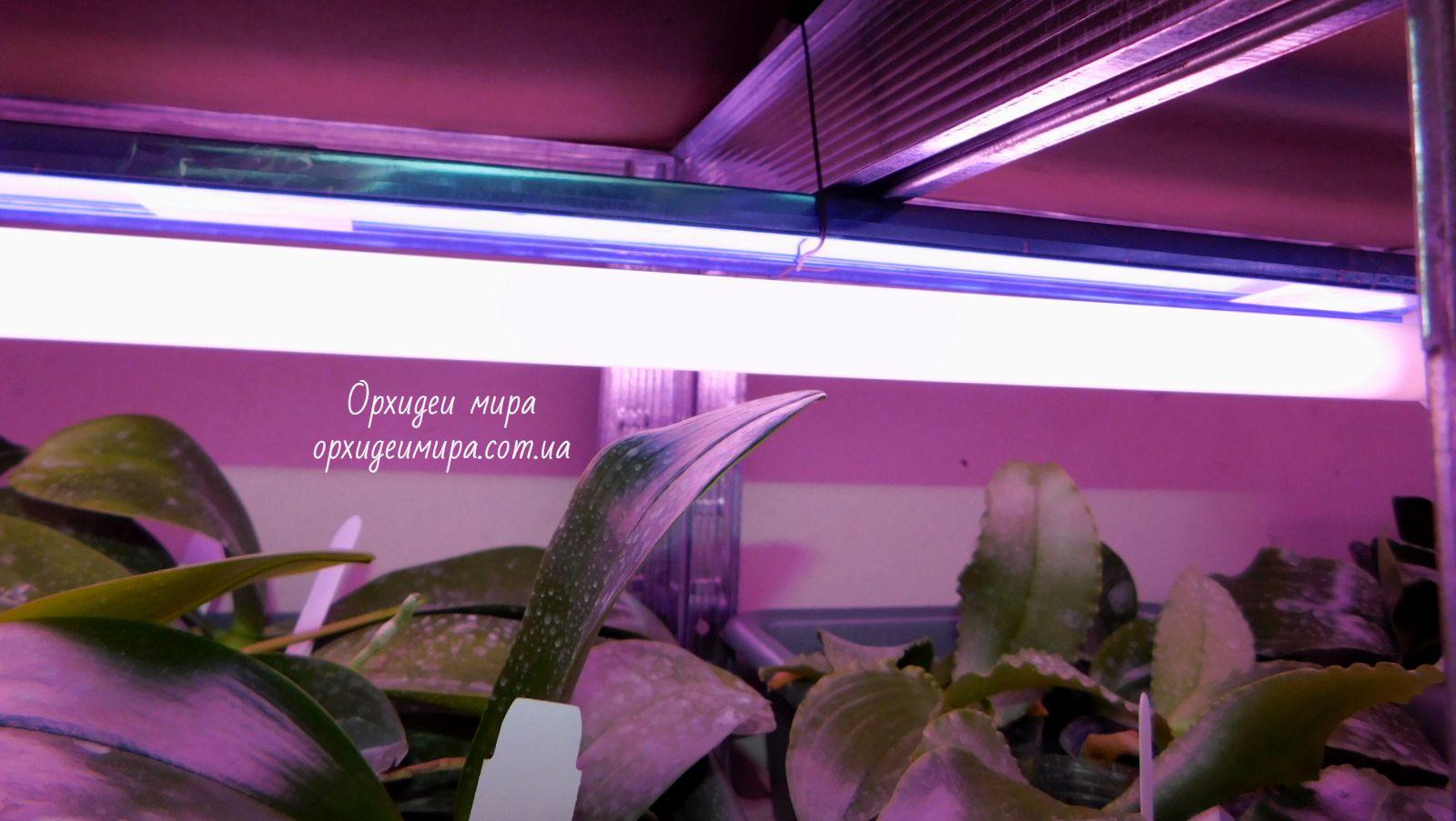 Лампы для орхидей
