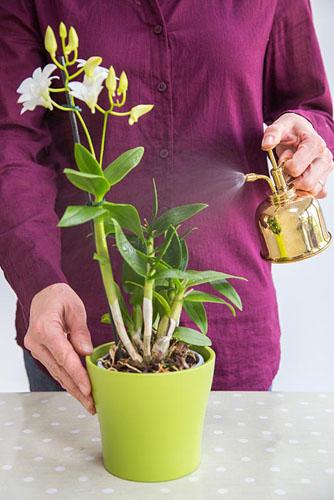 Стимулирование цветения орхидей