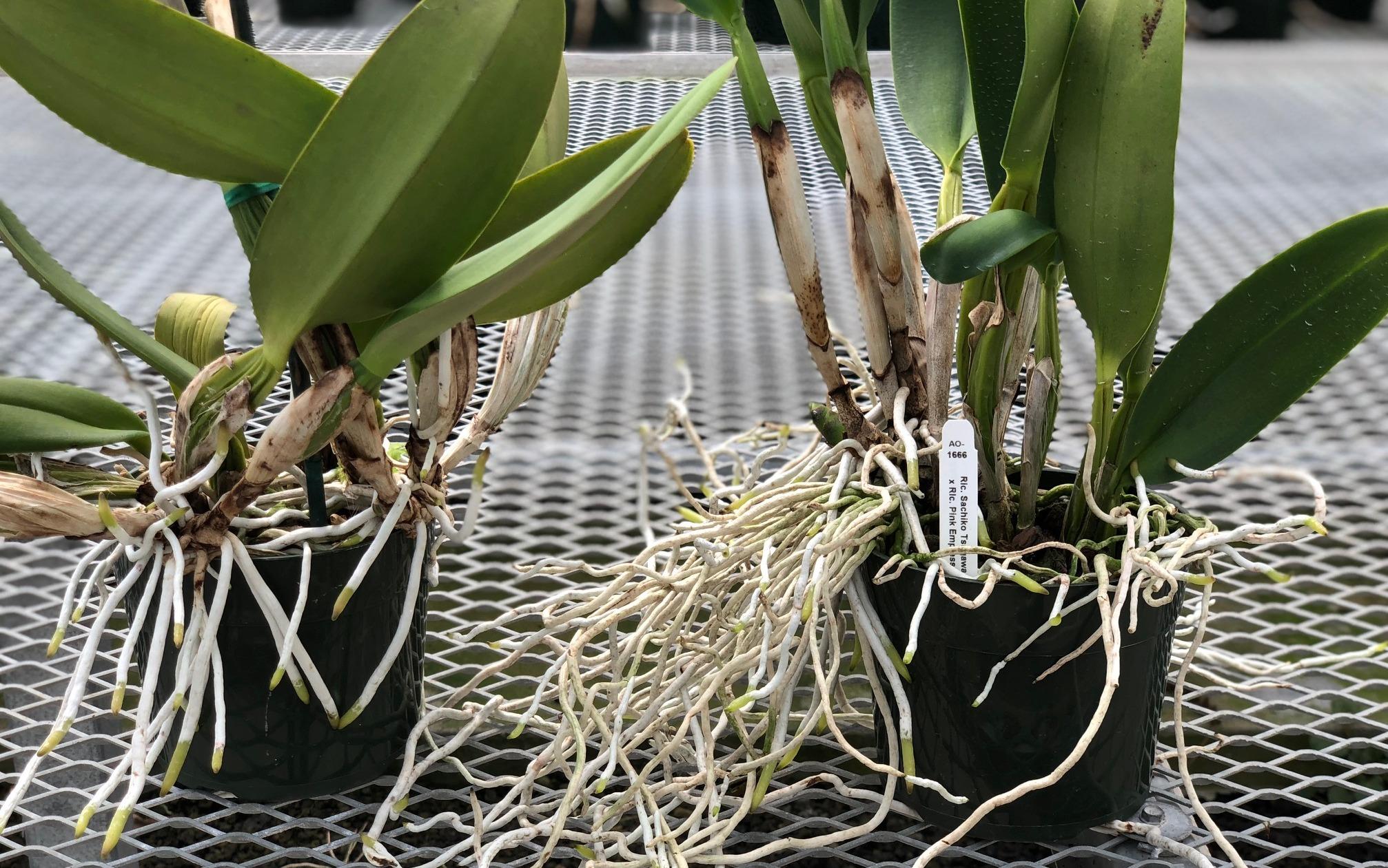 Удобрение орхидей