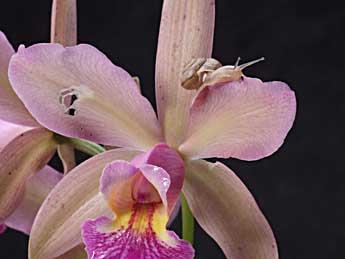 Улитка на орхидеях